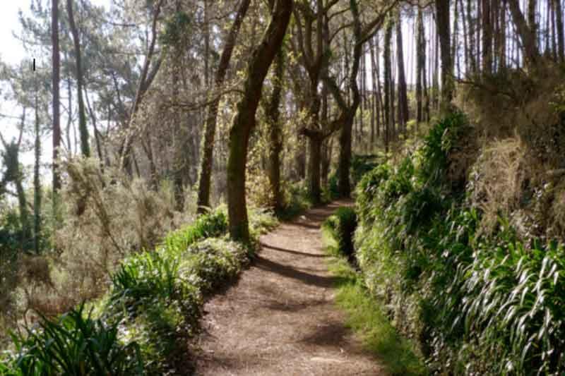 Levada da Serra do Faial - Fajã dos Rolos de Bicicleta de Montanha
